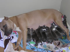 Nala with the litter